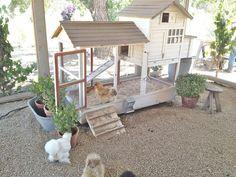 Sugen på att bygga hönshus? Här är 10 fantastiska små hus att bli inspirerad av.