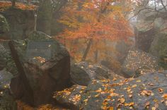 Purgatory Chasm, Worcester MA Fun Places To Go, Places To Visit, East Coast Travel, Massachusetts Usa, All Things New, Worcester, New England, Beautiful Things, Sick
