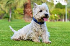 Free Photo: Dogs, Vesta, Doggies - Free Image on Pixabay - 447067
