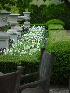 La Piscine - poolside decorating chic - urns on pedestals make a formal garden - Formal Gardens, Outdoor Gardens, Landscape Design, Garden Design, Planting Tulips, Garden Urns, Garden Hedges, White Gardens, Plantation