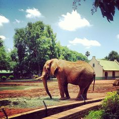 National Zoological Gardens of South Africa -  #3 Weekend Activities Pretoria, South Africa #JetpacCityGuides #Pretoria