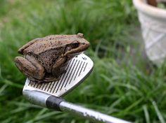 frog_9_iron