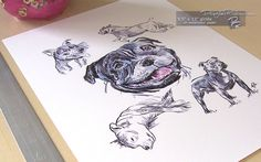 Staffordshire Bull Terriers #StaffordshireBullTerrier #StaffordshireBullTerrierDrawing #StaffordshireBullTerriers