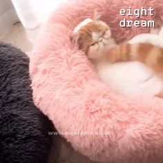 🐱 Eight Dream™ Cloud Bed The world's most popular premium cat bed Only available online Due to high demand, Eight Dream Cloud Beds are only avail. Cute Funny Animals, Cute Baby Animals, Animals And Pets, Cute Cats, Crazy Cat Lady, Crazy Cats, Cat Room, Cat Supplies, Dog Bed