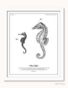 Vintage Sea Horse Print - Antique Illustration - Natural History - Seashells - Natural History - Sealife - Beach - Nautical - Seahorse