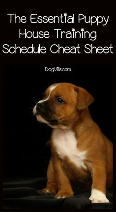 Puppy House Breaking Schedule Cheat Sheet You Need Welcoming a new furry friend to your family? You absolutely NEED this puppy house training schedule! It's going to make potty training your pooch a whole lot easier!Absolutely Absolutely may refer to: Puppies Tips, Best Puppies, Puppy Training Tips, Training Your Puppy, Training Dogs, Leash Training, Potty Training Puppies, Puppy Crate Training Schedule, Clicker Training Puppy