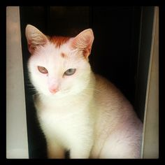 My Cat Dao Ming - (Photo from the Instacanvas gallery of itok_del_mundo.)
