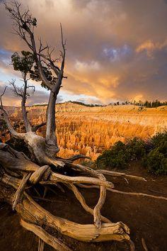 Bryce Canyon National Park, UT , USA
