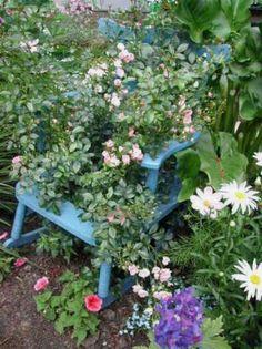 Old rocking chair planter painted blue with beautiful flowers Love Garden, Garden Pots, Garden Ideas, Cottage Gardens, Garden Chairs, Garden Furniture, Patio Tomatoes, Beautiful Gardens, Beautiful Flowers