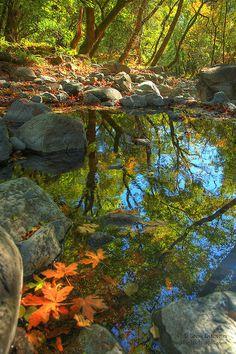 Fall Scene // Carriger Creek, Sonoma, CA