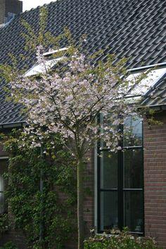 Welke bomen voor in de tuin - Tuinadvies door Ineke Garden Yard Ideas, Garden Landscaping, Prunus, Helpful Hints, Organize, Landscapes, Gardening, Interior, Happy