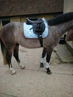 rose grey horse ice blue matching set