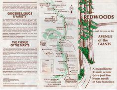 avenue of the giants maps | Avenue of the Giants | Favorite Places & Spaces