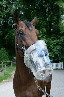 SaHoMa II - Inhalationsmaske für Pferde  www.stall-weide-zaun.de