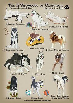 12 huskies of christmas