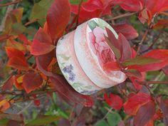 róża w borówkach