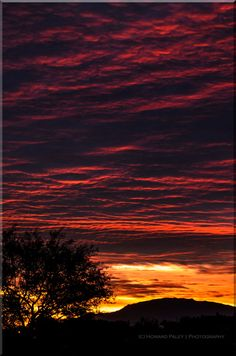 """""""The Sun Also Rises"""", Thanksgiving Day, Tucson, Az by Howard Paley The Sun Also Rises, Dawn And Dusk, Sunrise, Celestial, Tucson, Thanksgiving, Outdoor, Outdoors, Thanksgiving Tree"""