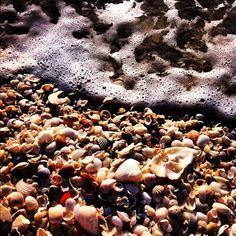 She shells seashells by the seashore | by @gennboo via Statigram