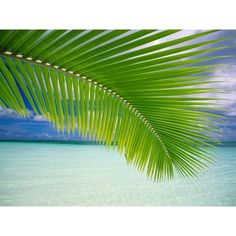 tropical backround ❤ liked on Polyvore featuring backgrounds and pictures