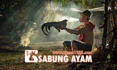 Hasil Pertandingan Arena BT1 Sabung Ayam S1228.net 08 November 2015