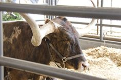 Sights and Sounds from the State Fair of Texas #bigtexsbarnyard www.farmcreditbank.com