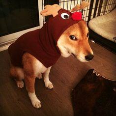 """""""I is reindeer"""""""