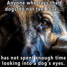 But don't look into their eyes to long other wise it'll make your dog mad and other results will happen.