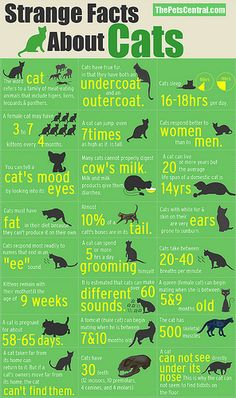 Strange Facts About Cats (Graphic)
