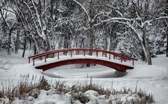 Winter Wonderland: snowy winter scenes of Christmas time. Winter Szenen, Winter Magic, Winter Time, Winter Season, Free Winter Wallpaper, I Love Snow, My Sun And Stars, Snowy Day, Snow Scenes