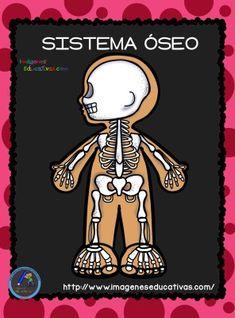 El Cuerpo Humano; Aparatos y Sistemas para Primaria - Imagenes Educativas