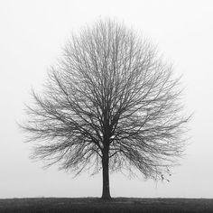 Black and white photography, tree, nature, trees, fog, landscape /  / Solitude, 11 x 11 print on Etsy, $50.00