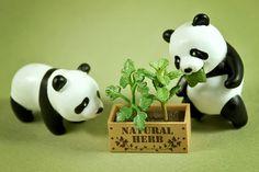 #pandas that nom