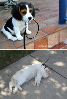 OK this one actually made me laugh out loud!!! Dogs vs Cats (19 Pics)