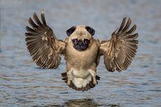 26 Incredible Non-Real Hybrid Animals