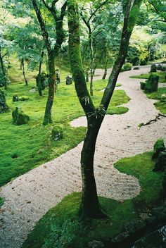 Zen Temple / Fukuoka, Japan Reminds me of the forest in The Wizard of Oz.