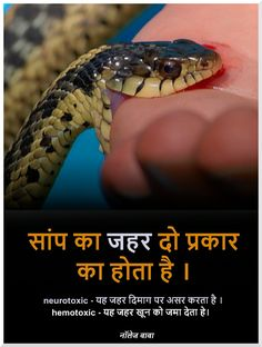 Interesting fact in Hindi Gernal Knowledge, General Knowledge Facts, Knowledge Quotes, Wow Facts, Real Facts, Funny Facts, Crazy Facts, Psychology Programs, Psychology Facts