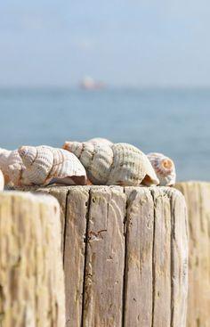 Shells Virginias Vintage Hire Loves!