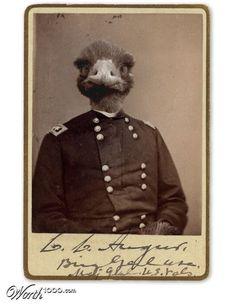 Emu soldier - Emu war.