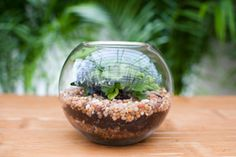 Build Your Own Terrariums... I remember Mom always having terrariums in our home when I was young (comfort)!