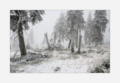 Harz Nebel schnee Urwald winter-idee wandbild