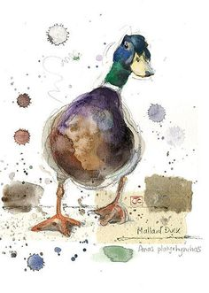 Mallard Duck by Jane Crowther for Bug Art greeting cards. #watercolorarts