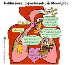 Antitissuves, Expectorants, Mucolytics