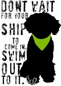 Portuguese Water Dog Art Print Wall Decor by GoingPlaces2 on Etsy http://www.etsy.com/listing/61896793/portuguese-water-dog-art-print-wall?ref=v1_other_1