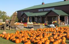 Boyd's Orchard for pumpkins and fall fun, Lexington, KY. Memories!