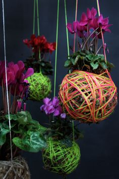 Hanging moss plants by Mister Moss. These. Are. Awesome. According to Apartment Therapy, they are DIY, too! Take a clump of soil, cover it with sphagnum moss, wrap it in colorful string, and pair it with a coordinating (or contrasting) plant. When your ball feels dry, simply dunk it in a bucket of water.    This is something that is happening.
