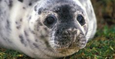 Stop the Canadian Government's Plan to Kill Seals for Sex Potions  https://takeaction.takepart.com/actions/stop-the-canadian-government-s-plan-to-kill-seals-for-sex-potions#