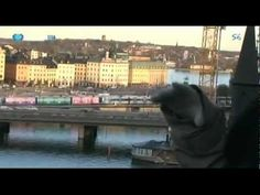 Portugueses Pelo Mundo - Estocolmo, Suécia