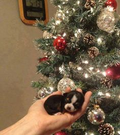 A MERRY Little CHRISTMAS !