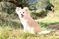 #pet #photography #Deerpark #forest #cape #town