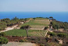 Tenuta delle Ripalte (Capoliveri – Elba island), famous for its Aleatico wine production